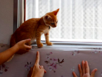 Warga Jepang Sebar Kucing Liar di Kereta Kawasan Ogaki